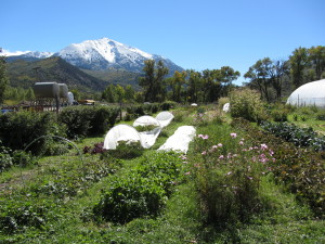 Beautiful view of 12,957 ft. Mt. Sopris from the market garden at Sustainable Settings