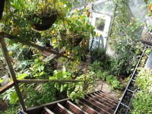 Stacking functions in greenhouse at Basalt Mountain Gardens