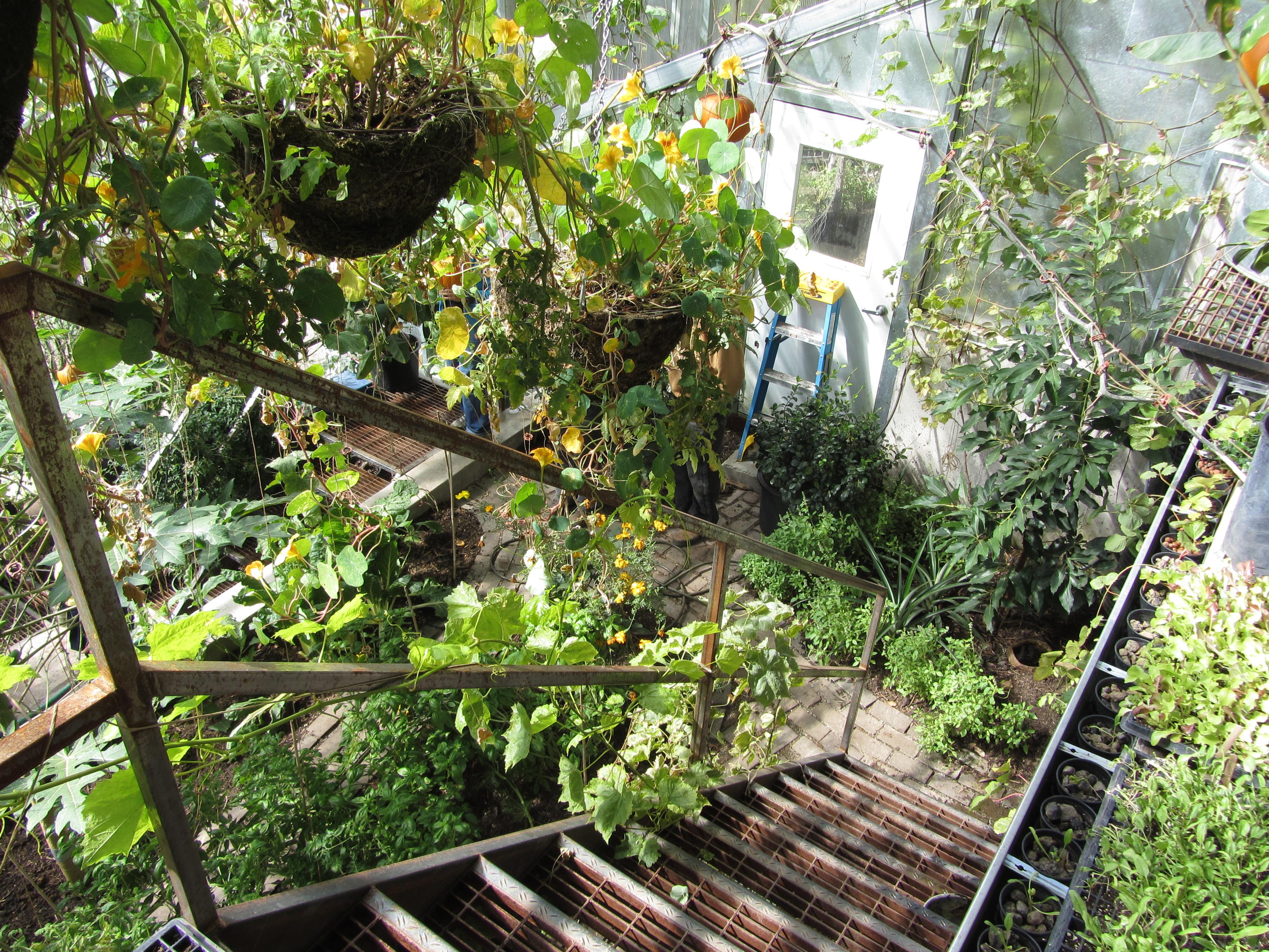 Aquaponics Greenhouse Layout