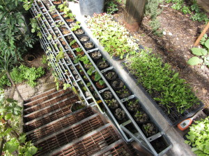 Aquaponics wall in greenhouse at Basalt Mountain Gardens