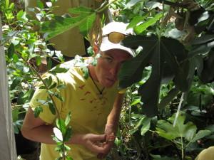 Mmm... enjoying fresh fig in greenhouse at CRMPI